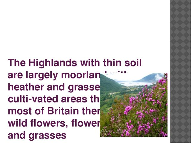 The Highlands with thin soil are largely moorland with heather and grasses. I...