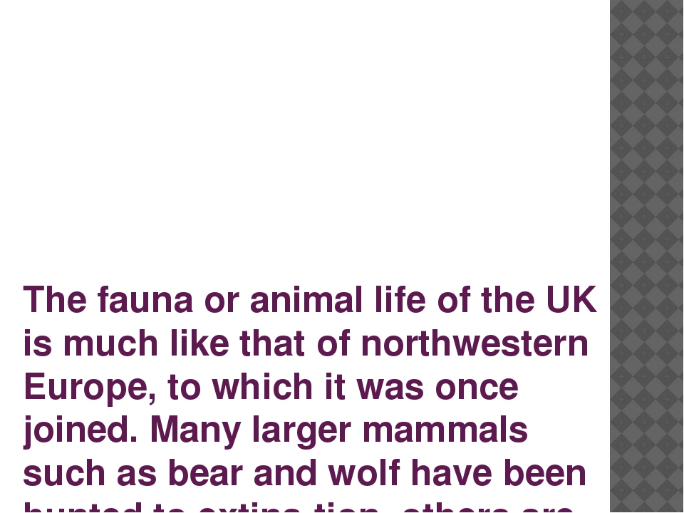 The fauna or animal life of the UK is much like that of northwestern Europe,...