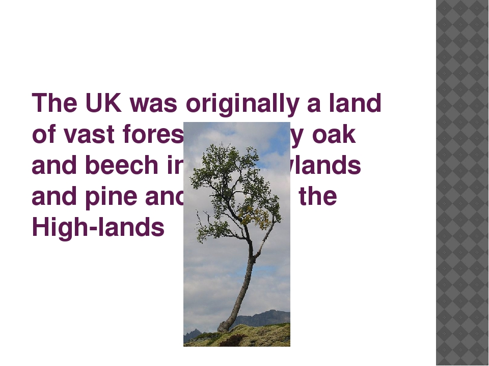The UK was originally a land of vast forests, mainly oak and beech in the Low...