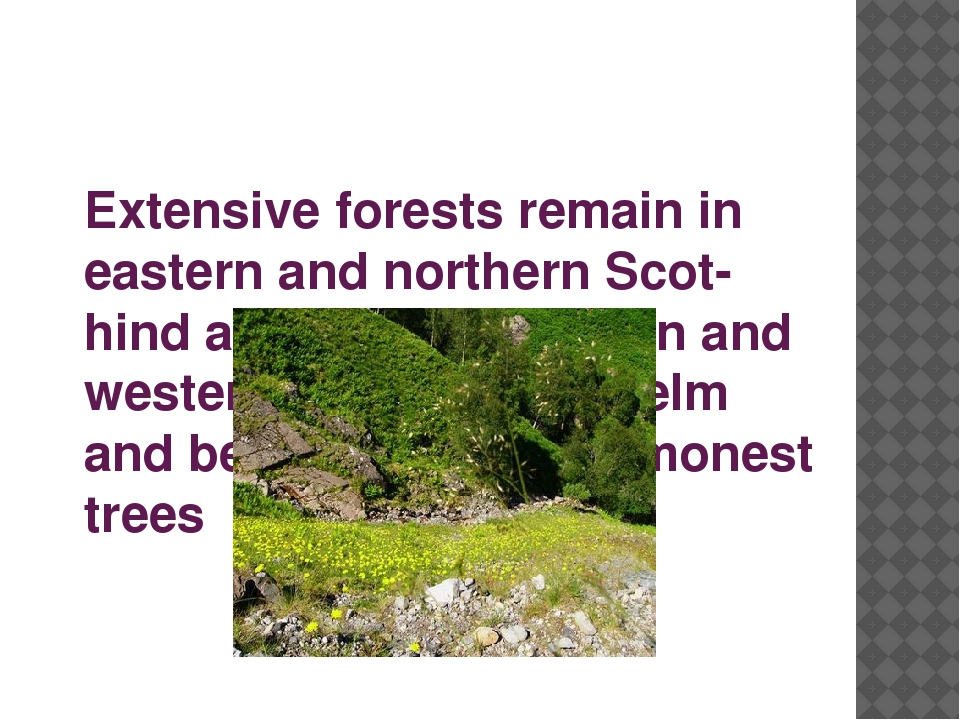 Extensive forests remain in eastern and northern Scot-hind and in southeaster...