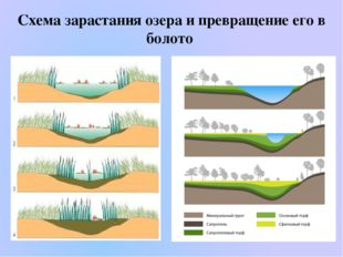 Схема зарастания озера и превращение его в болото