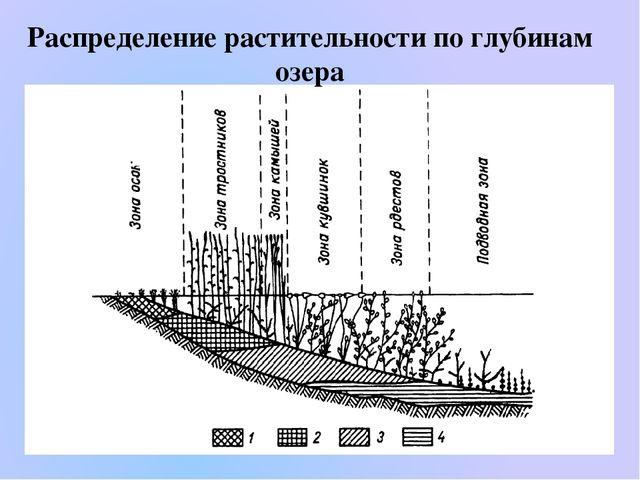 Распределение растительности по глубинам озера
