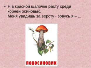 Я в красной шапочке расту среди корней осиновых. Меня увидишь за версту - зо