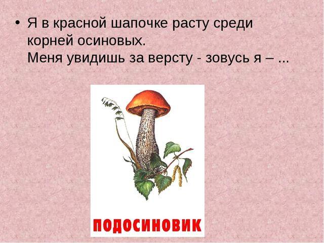 Я в красной шапочке расту среди корней осиновых. Меня увидишь за версту - зо...