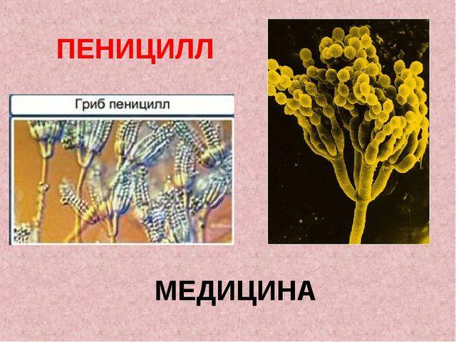 МЕДИЦИНА ПЕНИЦИЛЛ