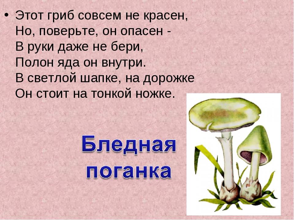 Этот гриб совсем не красен, Но, поверьте, он опасен - В руки даже не бери,...