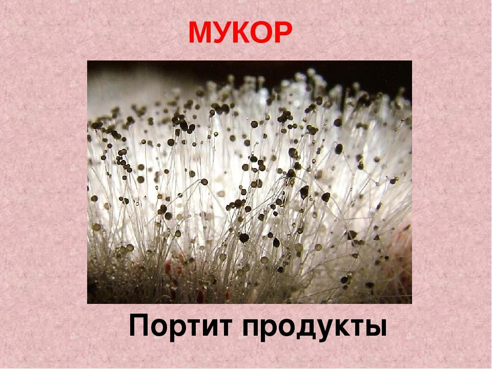 Портит продукты МУКОР