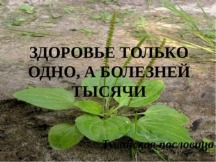 Тувинская пословица ЗДОРОВЬЕ ТОЛЬКО ОДНО, А БОЛЕЗНЕЙ ТЫСЯЧИ
