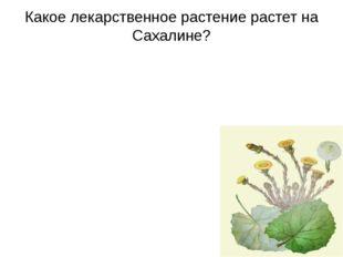 Какое лекарственное растение растет на Сахалине?