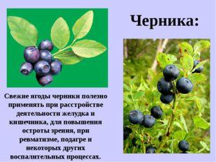 Свежие ягоды черники полезно применять при расстройстве деятельности желудка