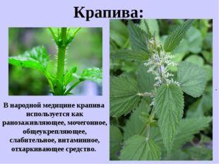 . Крапива: В народной медицине крапива используется как ранозаживляющее, моче