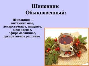 Шиповник — витаминозное, лекарственное, пищевое, медоносное, эфиромасличное