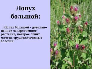 Лопух большой - довольно ценное лекарственное растение, которое лечит многие