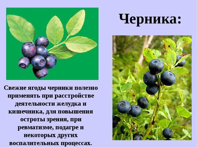 Свежие ягоды черники полезно применять при расстройстве деятельности желудка...