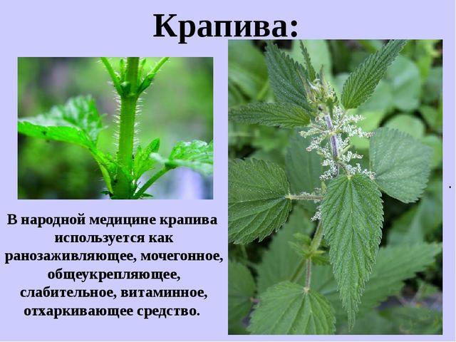 . Крапива: В народной медицине крапива используется как ранозаживляющее, моче...