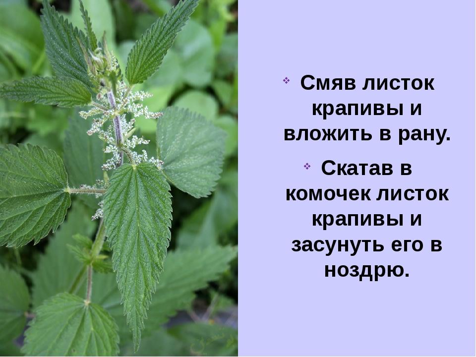 Смяв листок крапивы и вложить в рану. Скатав в комочек листок крапивы и засун...
