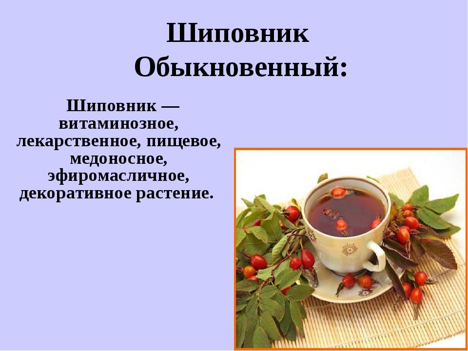Шиповник — витаминозное, лекарственное, пищевое, медоносное, эфиромасличное...