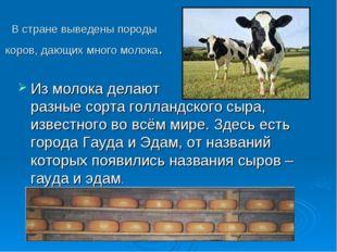 В стране выведены породы коров, дающих много молока. Из молока делают разные