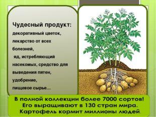 Чудесный продукт: декоративный цветок, лекарство от всех болезней, яд, истреб