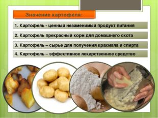 1. Картофель - ценный незаменимый продукт питания 2. Картофель прекрасный кор