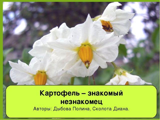 Картофель – знакомый незнакомец Авторы: Дыбова Полина, Сколота Диана.