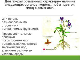 Для покрытосеменных характерно наличие следующих органов: корень, побег, цвет