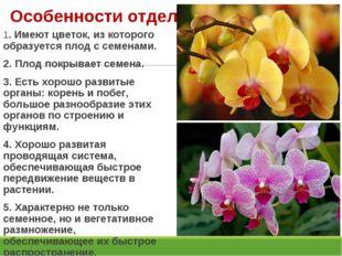 Особенности отдела: 1. Имеют цветок, из которого образуется плод с семенами.