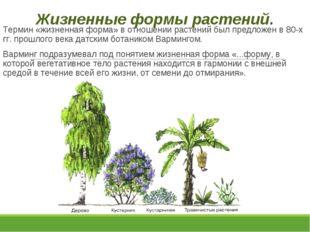Жизненные формы растений. Термин «жизненная форма» в отношении растений был п