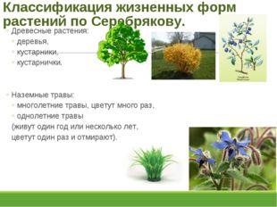 Классификация жизненных форм растений по Серебрякову. Древесные растения: дер