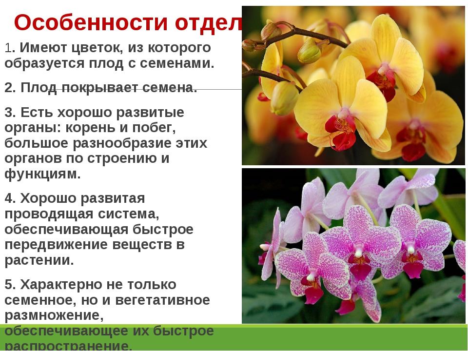 Особенности отдела: 1. Имеют цветок, из которого образуется плод с семенами....