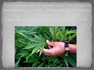 Ст.231 «Незаконное культивирование запрещённых к возделыванию растений, содер