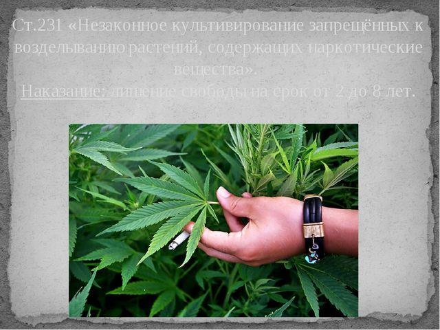 Ст.231 «Незаконное культивирование запрещённых к возделыванию растений, содер...
