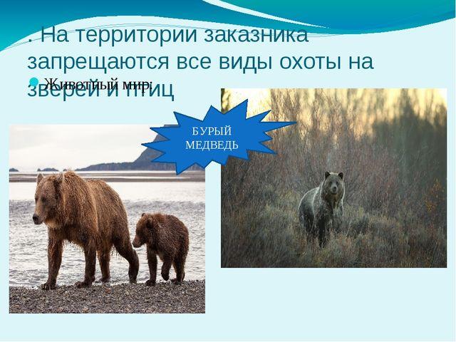 . На территории заказника запрещаются все виды охоты на зверей и птиц Животны...