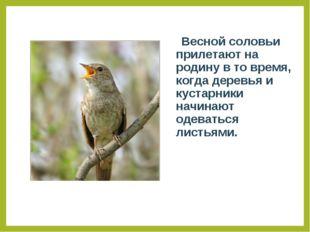 Весной соловьи прилетают на родину в то время, когда деревья и кустарники на