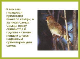 К местам гнездовья прилетают вначале самцы, а за ними самки. Самцы сразу сбив
