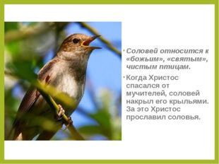 Соловей относится к «божьим», «святым», чистым птицам. Когда Христос спасался