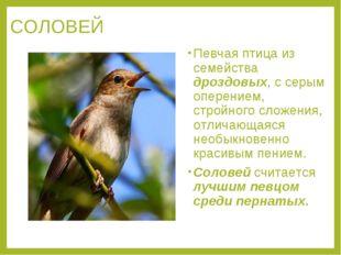 СОЛОВЕЙ Певчая птица из семейства дроздовых, с серым оперением, стройного сло