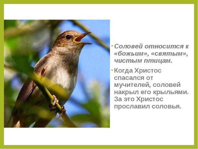 Соловей относится к «божьим», «святым», чистым птицам. Когда Христос спасался...