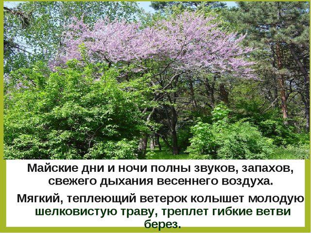 Майские дни и ночи полны звуков, запахов, свежего дыхания весеннего воздуха....