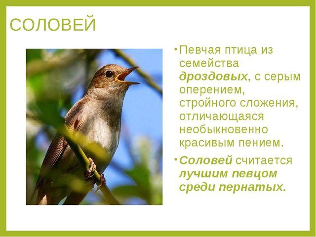 СОЛОВЕЙ Певчая птица из семейства дроздовых, с серым оперением, стройного сло...