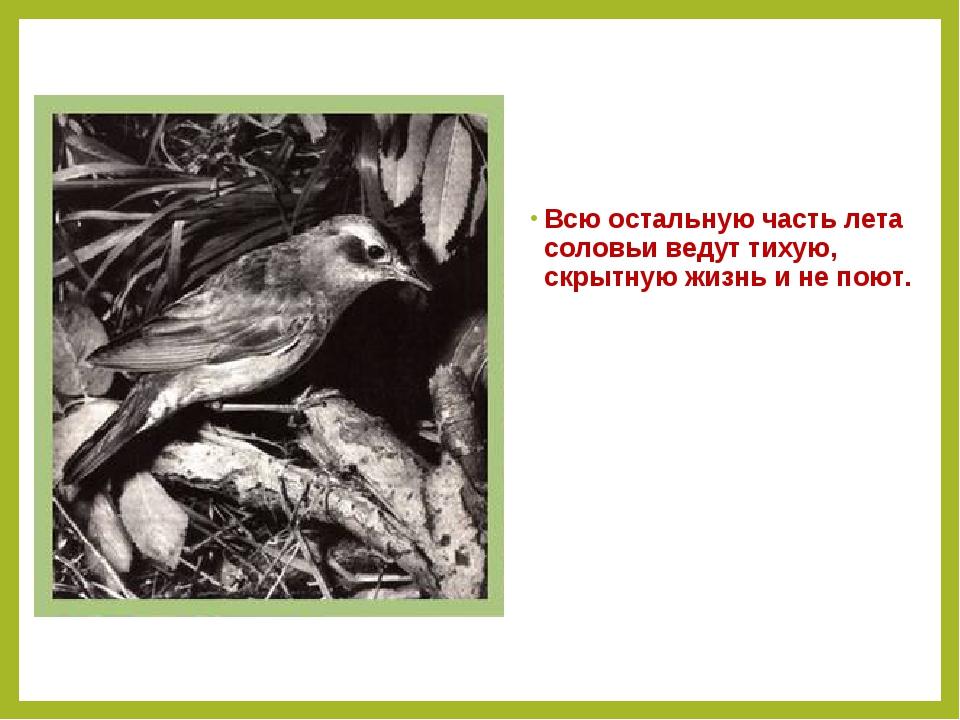 Всю остальную часть лета соловьи ведут тихую, скрытную жизнь и не поют.