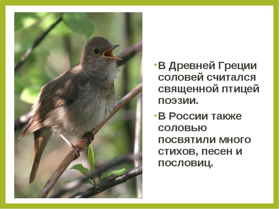 В Древней Греции соловей считался священной птицей поэзии. В России также сол...