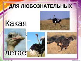 ДЛЯ ЛЮБОЗНАТЕЛЬНЫХ Какая птица не летает, но быстро бегает? Это самая высокая