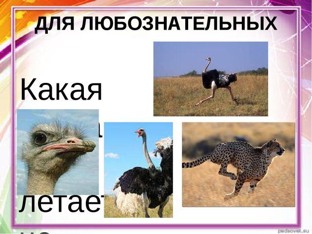 ДЛЯ ЛЮБОЗНАТЕЛЬНЫХ Какая птица не летает, но быстро бегает? Это самая высокая...