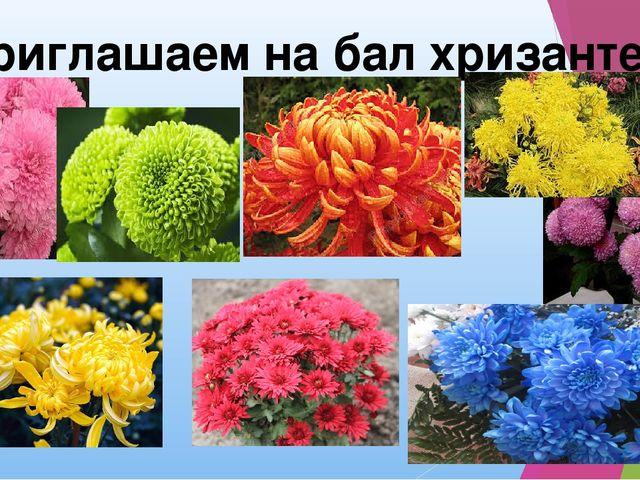Приглашаем на бал хризантем