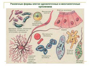 Различные формы клеток одноклеточных и многоклеточных организмов