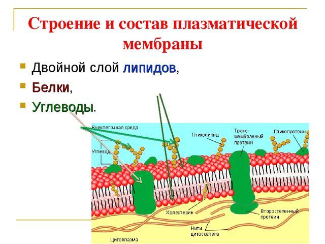 Строение и состав плазматической мембраны Двойной слой липидов, Белки, Углево...