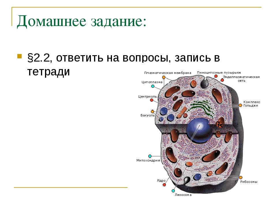 Домашнее задание: §2.2, ответить на вопросы, запись в тетради