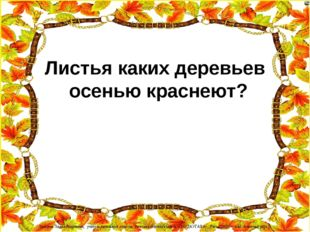 Листья каких деревьев осенью краснеют? Лазарева Лидия Андреевна, учитель нача