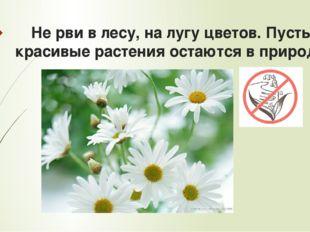 Не рви в лесу, на лугу цветов. Пусть красивые растения остаются в природе